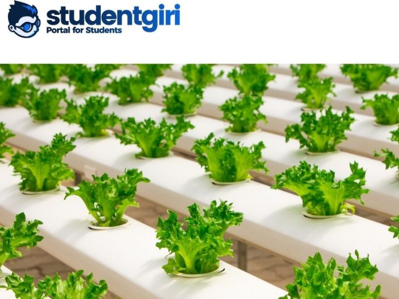 Hydroponics: The system of soilless cultivation