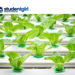 How to build a hydroponic system at home